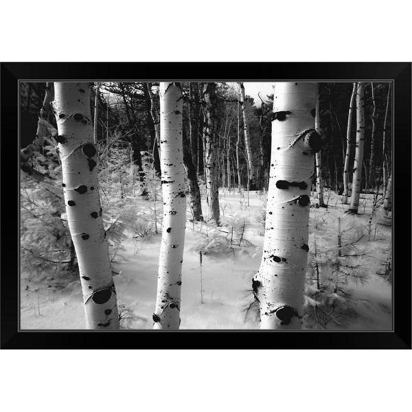 """""""Aspen trunks, winter scene"""" Black Framed Print"""