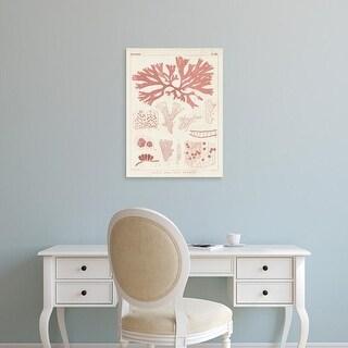 Easy Art Prints Vision Studio's 'Antique Coral Seaweed III' Premium Canvas Art