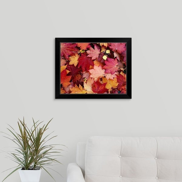 """""""Maple leaves spread out on the ground"""" Black Framed Print"""