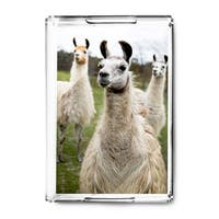 Llamas - Lantern Press Photography (Acrylic Serving Tray)