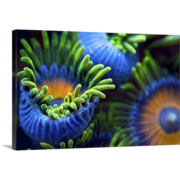 """The Colors Of The Reef II"" Canvas Wall Art"