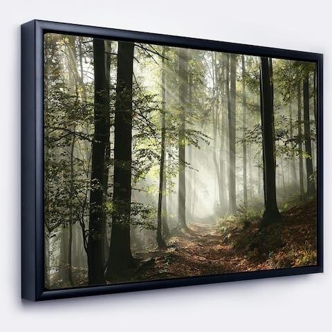 Designart 'Light in Dense Fall Forest with Fog' Landscape Art Print Framed Canvas