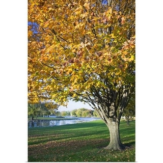 """Fallen leaves around autumn color tree, Iowa"" Poster Print"