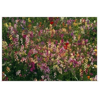 """""""Wildflowers in bloom, close-up."""" Poster Print"""