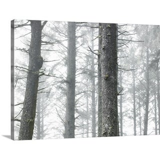 """USA, Washington, Kalaloch, Olympic National Park, trees in fog"" Canvas Wall Art"