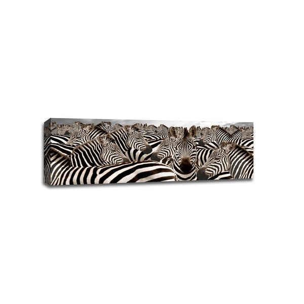 Herd of Zebras - Animals - 48x16 Gallery Wrapped Canvas Wall Art