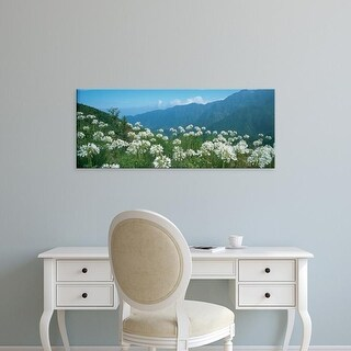 Easy Art Prints Panoramic Images's 'Flowers in an ecological park, Encumeda, Madeira, Portugal' Premium Canvas Art