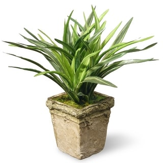 "9"" Potted Mini Dracaena Plant - N/A"