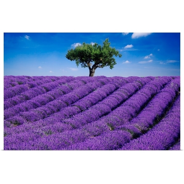 """""""Lavender field in summer with one tree. Haute Provence, France"""" Poster Print"""