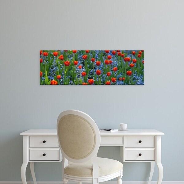 Easy Art Prints Panoramic Image 'Tulips, Butchart Gardens, Victoria, Vancouver Island, Canada' Canvas Art