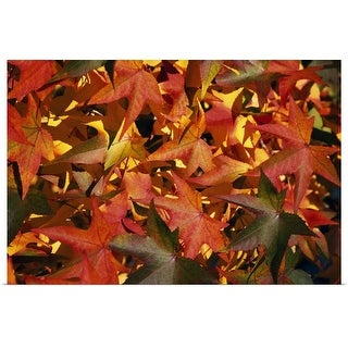 """Autumn color leaves, close up, Oregon"" Poster Print"