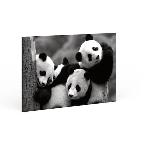 Porch & Den Danita Delimont 'Pandas' Quality Hand-wrapped Canvas