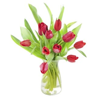 KaBloom Valentine s Day 10 Red Tulips Fresh from Holland with Vase