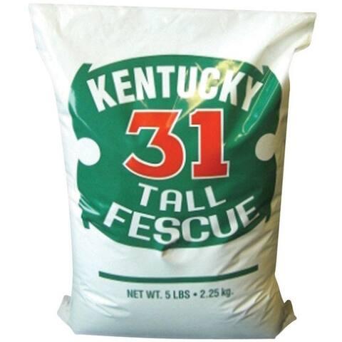Barenbrug Kentucky 31 Tall Fescue Grass Seed, 5 lbs