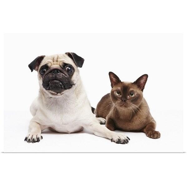 """""""Pug and Burmese cat"""" Poster Print"""