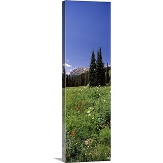 """""""Wildflowers in a forest Crested Butte Gunnison County Colorado"""" Canvas Wall Art"""