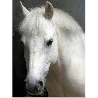 """""""Portrait of a white horse"""" Poster Print"""