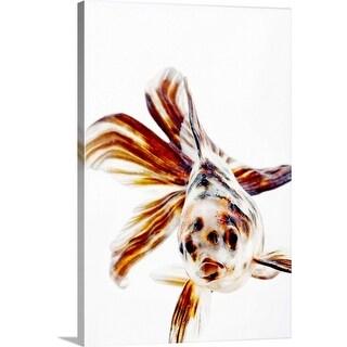 """Calico Fantail Comet goldfish (Carassius auratus) has long, fan-like fins."" Canvas Wall Art"