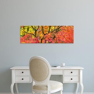 Easy Art Prints Panoramic Images's 'Trees in autumn, Westonbirt Arboretum, Gloucestershire, England' Canvas Art