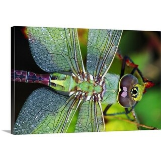 Premium Thick-Wrap Canvas entitled Green Darner Dragonfly
