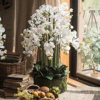 RusticReach Large Orchid Arrangement in Soil