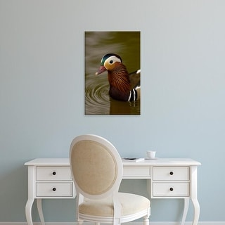 Easy Art Prints Pete Oxford's 'Mandarin Duck' Premium Canvas Art