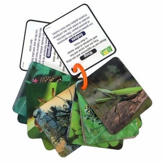 Animal Planet Bugs & Insects 3-D Flash Cards