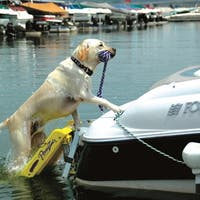 "Pawz Pet Products Dog Boat Ladder Yellow 64"" x 16"""