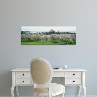 Easy Art Prints Panoramic Images's 'Cherry trees in an orchard, Mission Peninsula, Traverse City, Michigan' Canvas Art