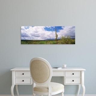 Easy Art Prints Panoramic Images's 'Cactus in a desert, Saguaro National Monument, Tucson, Arizona, USA' Canvas Art