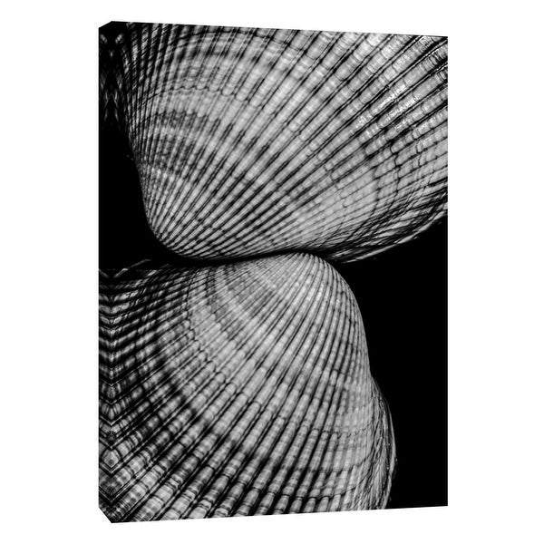 """PTM Images 9-108387 PTM Canvas Collection 10"""" x 8"""" - """"Seashell Sight"""" Giclee Shells Art Print on Canvas"""