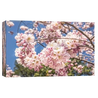 "PTM Images 9-103791  PTM Canvas Collection 8"" x 10"" - ""Cherry Blossoms 1"" Giclee Cherry Blossoms Art Print on Canvas"