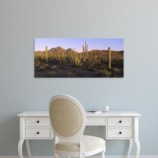 Easy Art Prints Panoramic Image 'Saguaro Cactus, Saguaro National Park, New Mexico, Arizona' Canvas Art