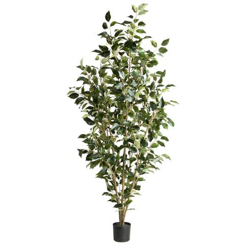 5 Ft. Potted Ficus Tree - 5ft