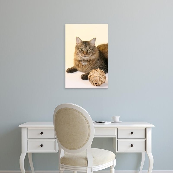 Easy Art Prints Maresa Pryor's 'Maine Coon Cat in studio' Premium Canvas Art