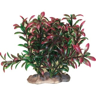 Betta Plant