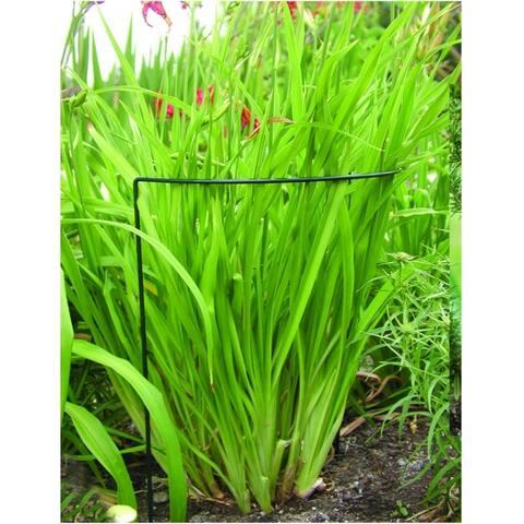 """Luster Leaf® 1045 Link-Ups® Plant Prop-Up U-Support, 15"""" x 30"""""""