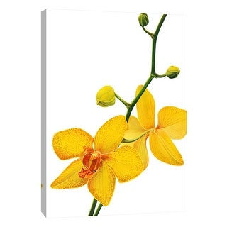 "PTM Images 9-105759  PTM Canvas Collection 10"" x 8"" - ""Budding Orchid"" Giclee Orchids Art Print on Canvas"
