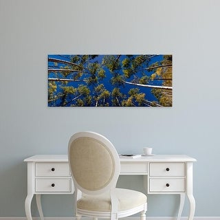 Easy Art Prints Panoramic Images's 'Low angle view of Aspen trees, Aspen, Pitkin County, Colorado, USA' Canvas Art