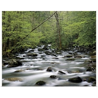 """""""Greenbrier area area, Great Smoky Mountains National Park, Tennessee"""" Poster Print"""