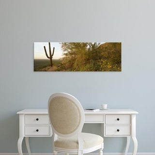 Easy Art Prints Panoramic Images's 'Cactus in desert, Picacho Peak State Park, Arizona, USA' Premium Canvas Art