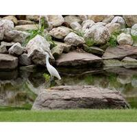 White Bird Photograph Wall Art Canvas