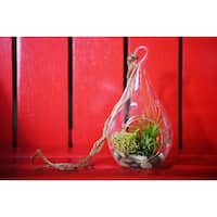 9GreenBox - Air Plant - Tear Drop Terrarium Kit with Moss and Pebbles