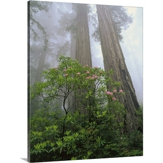 """California, Redwood trees and rhododendron"" Canvas Wall Art"
