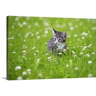 """Kitten"" Canvas Wall Art"