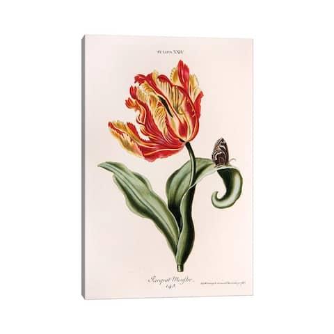 "iCanvas ""Tulipa XXIV (Parquit-Monstre)"" by Georg Dionysius Ehret Canvas Print"
