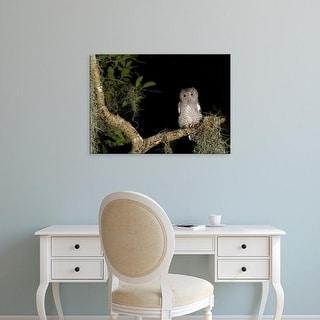 Easy Art Prints Maresa Pryor's 'Screech Owl Fledglings' Premium Canvas Art