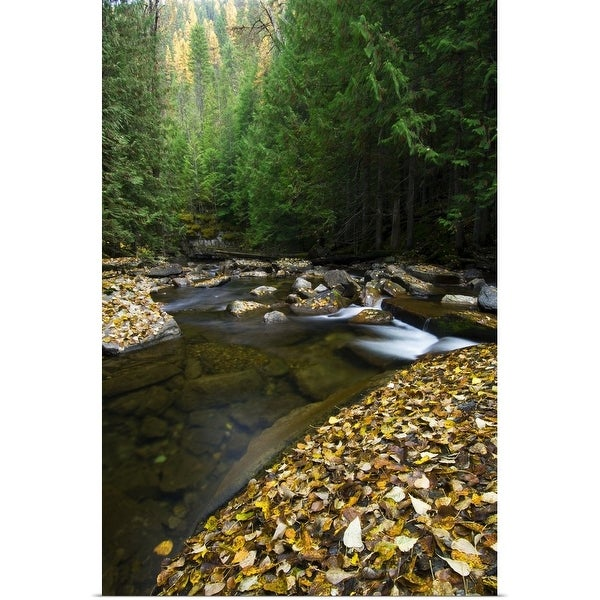 """Fallen autumn color leaves and forest along Ross Creek, Montana"" Poster Print"