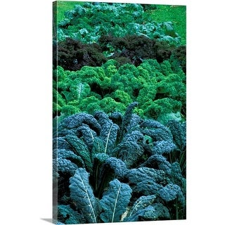 Premium Thick-Wrap Canvas entitled Different coloured Brassica (kale) growing in a row