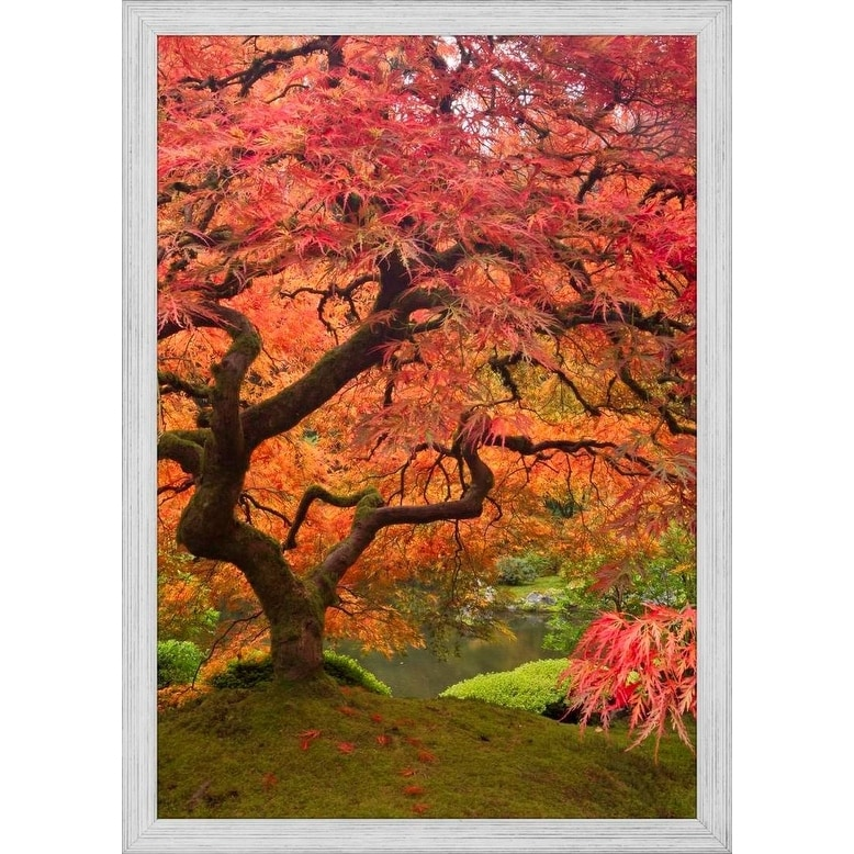 Shop Easy Art Prints William Sutton S Japanese Maple In Fall